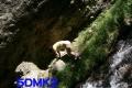 洋子、山ん中で尻晒し
