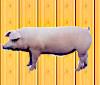 豚ハンター